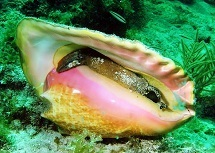 queen conch key west sailing adventure best sight seeing ever