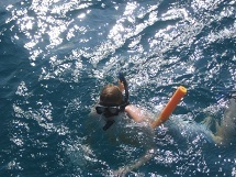 snorkeling Key West Florida Vacation activities