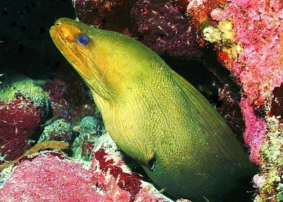 green moray eel vacation activities with key west sailing adventure